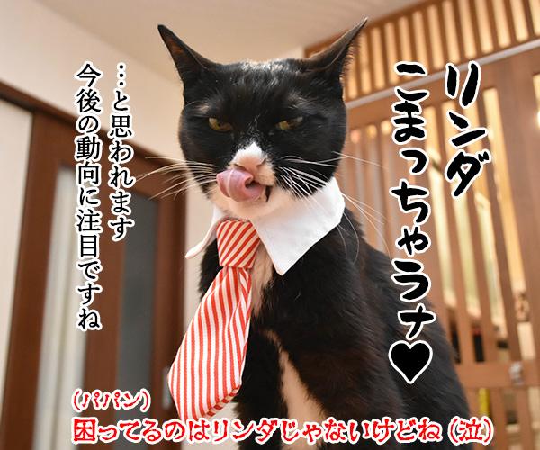 「時短命令は違憲」で都を提訴なのよッ 猫の写真で4コマ漫画 4コマ目ッ