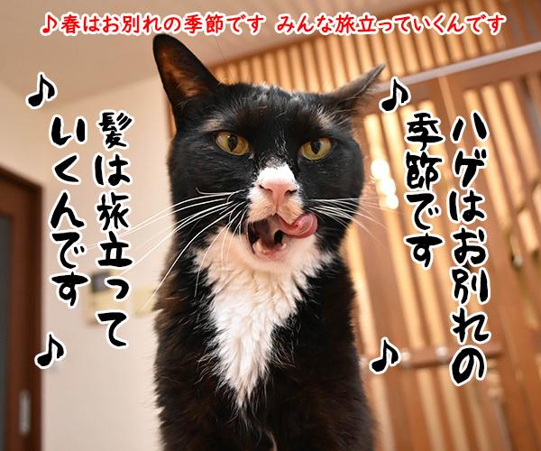 おニャン子クラブの「じゃあね」はこの季節にぴったりよねッ 猫の写真で4コマ漫画 2コマ目ッ