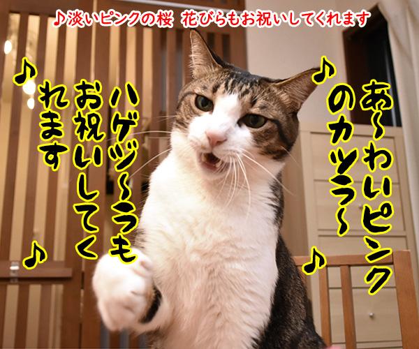 おニャン子クラブの「じゃあね」はこの季節にぴったりよねッ 猫の写真で4コマ漫画 3コマ目ッ