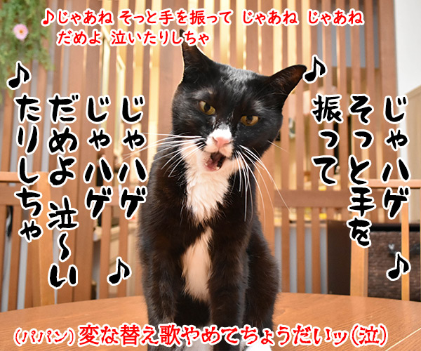 おニャン子クラブの「じゃあね」はこの季節にぴったりよねッ 猫の写真で4コマ漫画 4コマ目ッ