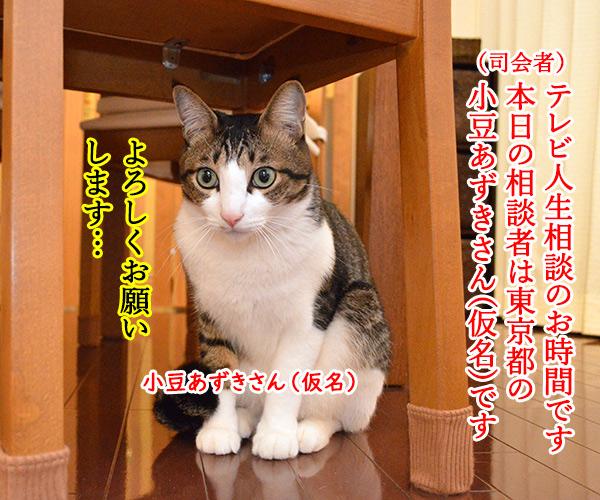 D子さん(人生相談) 猫の写真で4コマ漫画 1コマ目ッ