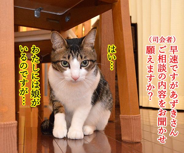 D子さん(人生相談) 猫の写真で4コマ漫画 2コマ目ッ