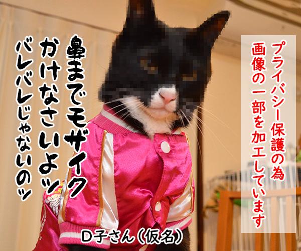 D子さん(人生相談) 猫の写真で4コマ漫画 4コマ目ッ