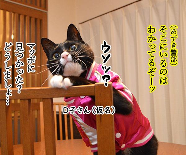 D子さん(追いつめられて) 猫の写真で4コマ漫画 1コマ目ッ