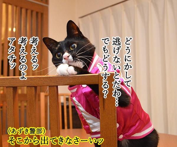 D子さん(追いつめられて) 猫の写真で4コマ漫画 2コマ目ッ