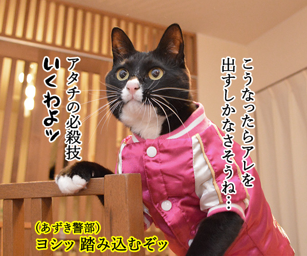 D子さん(追いつめられて) 猫の写真で4コマ漫画 3コマ目ッ