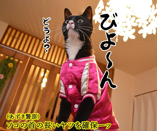 D子さん(追いつめられて) 猫の写真で4コマ漫画 4コマ目ッ