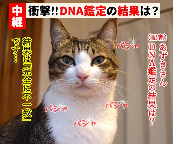 D子さん(DNA鑑定) 猫の写真で4コマ漫画 1コマ目ッ