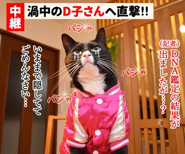 D子さん(DNA鑑定) 猫の写真で4コマ漫画 3コマ目ッ