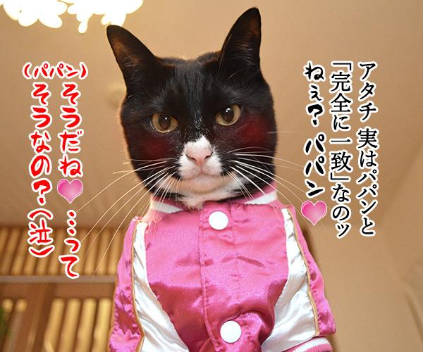 D子さん(DNA鑑定) 猫の写真で4コマ漫画 4コマ目ッ