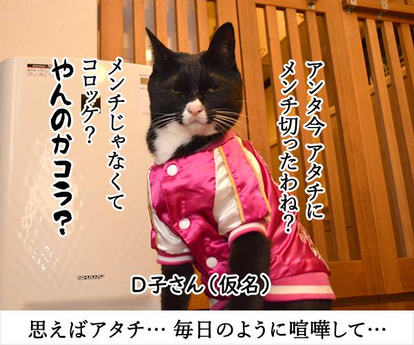 D子さん(その後) 猫の写真で4コマ漫画 1コマ目ッ