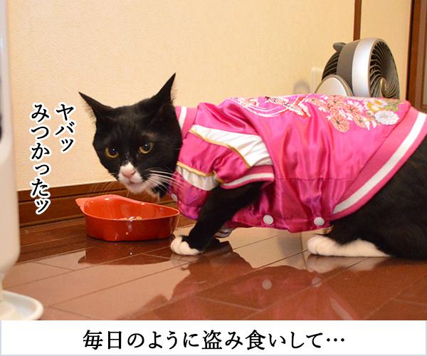 D子さん(その後) 猫の写真で4コマ漫画 2コマ目ッ
