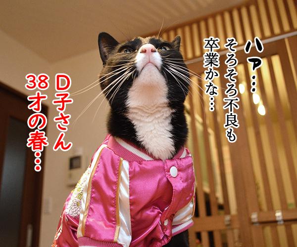 D子さん(その後) 猫の写真で4コマ漫画 4コマ目ッ