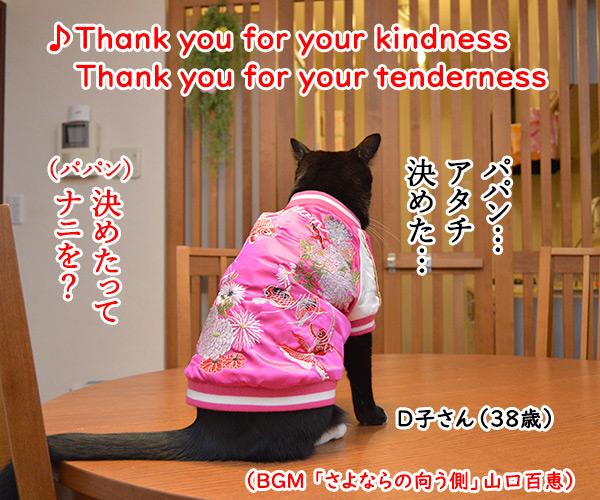 Ⅾ子さん(さよならの向う側) 猫の写真で4コマ漫画 1コマ目ッ