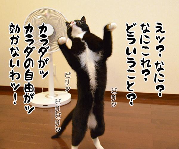 気功師 あずき 其の一(実演) 猫の写真で4コマ漫画 2コマ目ッ