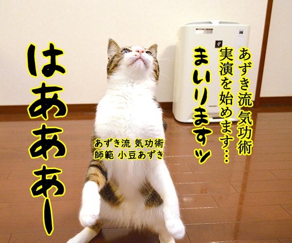 気功師 あずき 其の一(実演) 猫の写真で4コマ漫画 1コマ目ッ