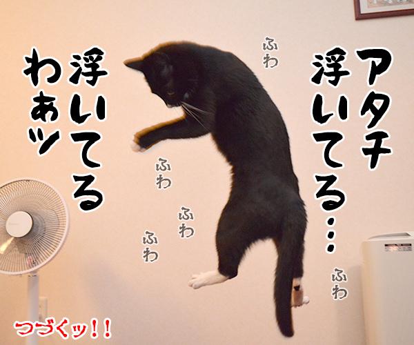 気功師 あずき 其の一(実演) 猫の写真で4コマ漫画 4コマ目ッ