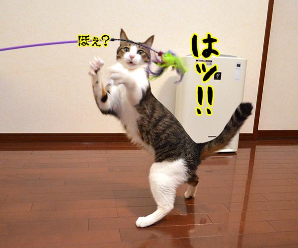 気功師 あずき 其の二(その頃…) 猫の写真で4コマ漫画 2コマ目ッ