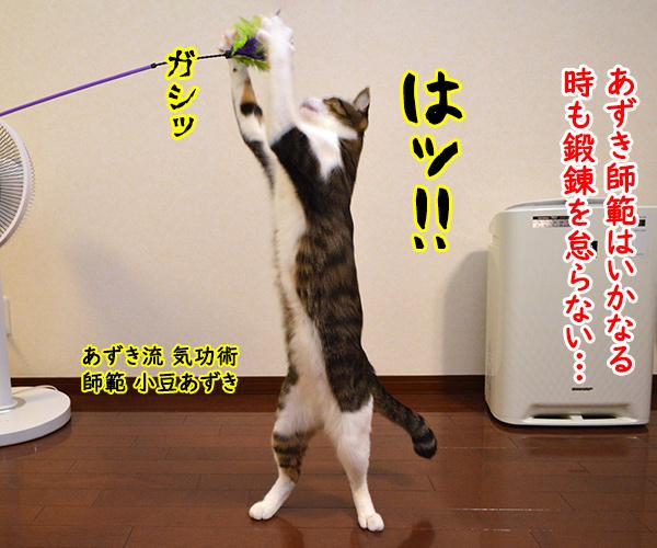 気功師 あずき 其の二(その頃…) 猫の写真で4コマ漫画 1コマ目ッ