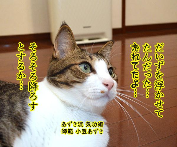 気功師 あずき 其の三(そろそろ) 猫の写真で4コマ漫画 1コマ目ッ