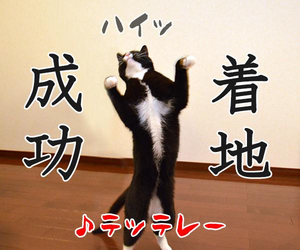 気功師 あずき 其の三(そろそろ) 猫の写真で4コマ漫画 5コマ目ッ
