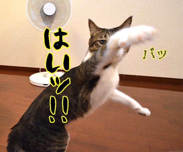 気功師 あずき 其の三(そろそろ) 猫の写真で4コマ漫画 3コマ目ッ