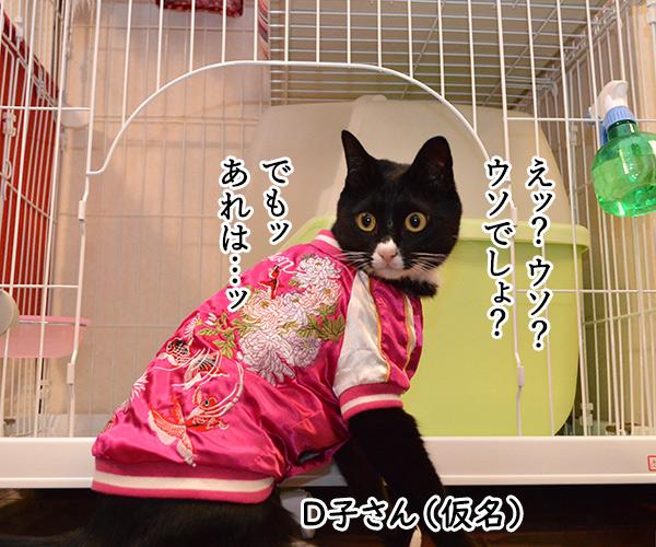 D子さん(お兄ちゃん?) 猫の写真で4コマ漫画 1コマ目ッ