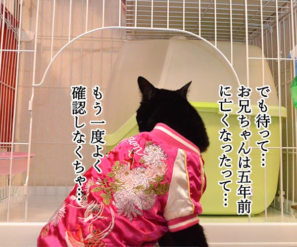 D子さん(お兄ちゃん?) 猫の写真で4コマ漫画 3コマ目ッ