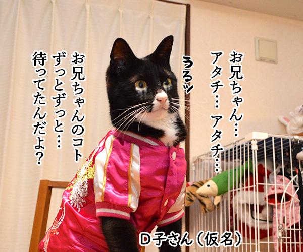D子さん(感動の再会) 猫の写真で4コマ漫画 2コマ目ッ