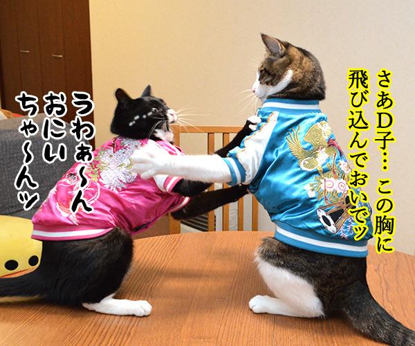 D子さん(感動の再会) 猫の写真で4コマ漫画 3コマ目ッ