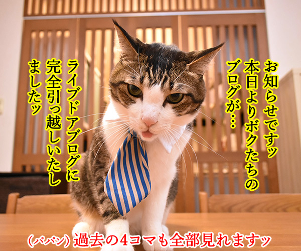 ライブドアブログに完全引っ越ししたのよッ 猫の写真で4コマ漫画 1コマ目ッ