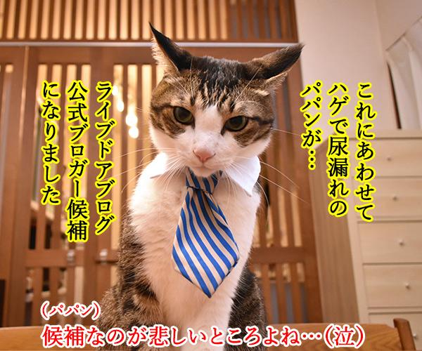 ライブドアブログに完全引っ越ししたのよッ 猫の写真で4コマ漫画 2コマ目ッ
