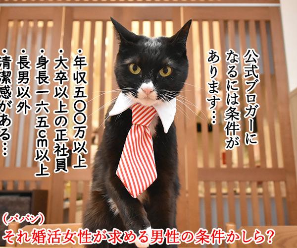 ライブドアブログに完全引っ越ししたのよッ 猫の写真で4コマ漫画 3コマ目ッ