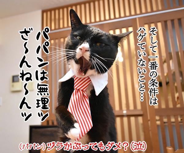 ライブドアブログに完全引っ越ししたのよッ 猫の写真で4コマ漫画 4コマ目ッ