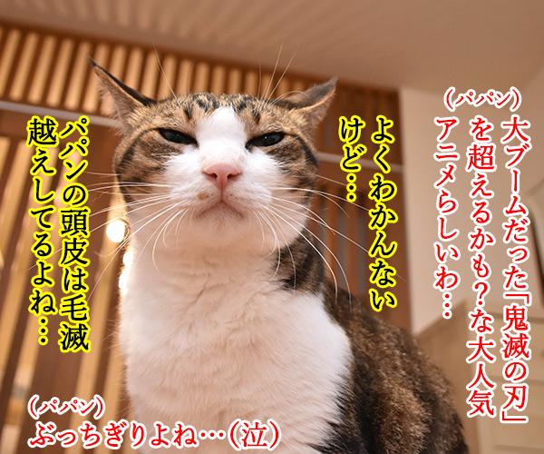 『呪術廻戦』ってアニメが大人気なんですってッ 猫の写真で4コマ漫画 2コマ目ッ