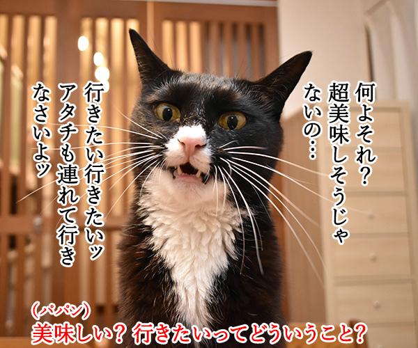 『呪術廻戦』ってアニメが大人気なんですってッ 猫の写真で4コマ漫画 3コマ目ッ
