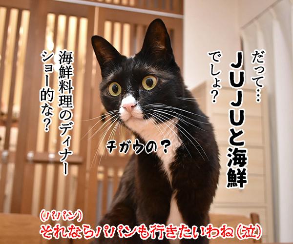 『呪術廻戦』ってアニメが大人気なんですってッ 猫の写真で4コマ漫画 4コマ目ッ