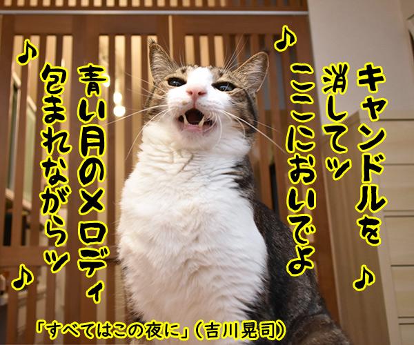 『キャンドル』でわかるあなたの〇〇〇 猫の写真で4コマ漫画 4コマ目ッ