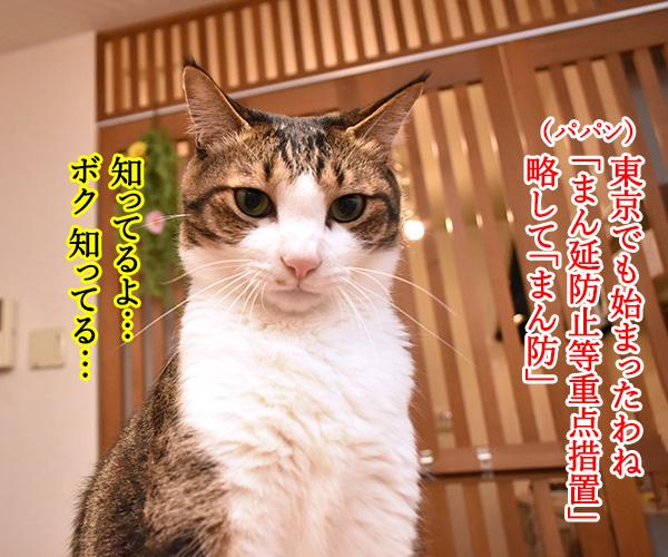 東京でも「まん延防止等重点措置」が始まったのよッ 猫の写真で4コマ漫画 1コマ目ッ