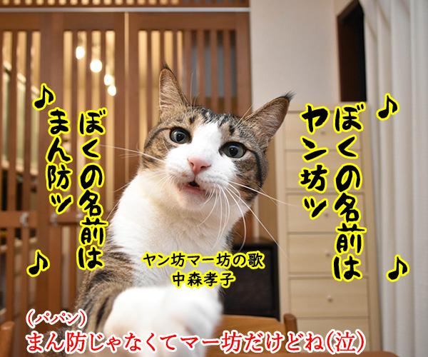 東京でも「まん延防止等重点措置」が始まったのよッ 猫の写真で4コマ漫画 2コマ目ッ