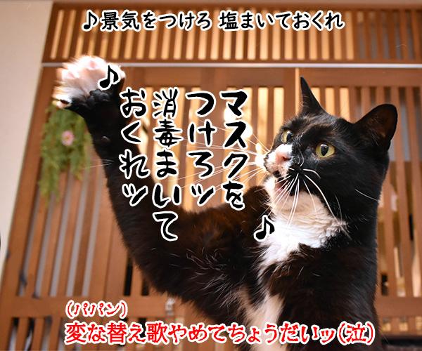東京でも「まん延防止等重点措置」が始まったのよッ 猫の写真で4コマ漫画 4コマ目ッ