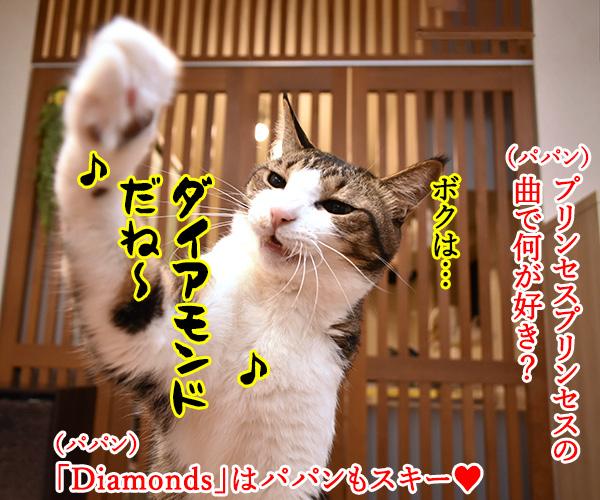 プリプリの曲で何が好きー? 猫の写真で4コマ漫画 1コマ目ッ