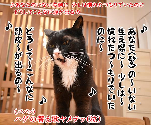 プリプリの曲で何が好きー? 猫の写真で4コマ漫画 3コマ目ッ