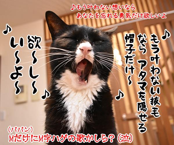 プリプリの曲で何が好きー? 猫の写真で4コマ漫画 4コマ目ッ