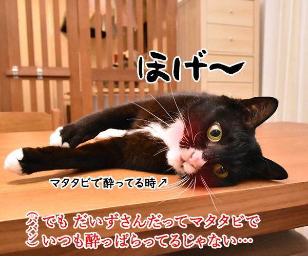 アタチ酔っ払いがキライなのよッ 猫の写真で4コマ漫画 3コマ目ッ