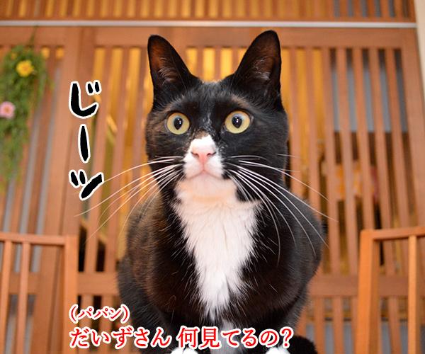 陰陽師(其の一)ねぇ? 何を見てるの? 猫の写真で4コマ漫画 1コマ目ッ