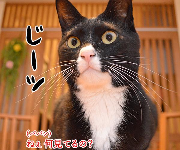 陰陽師(其の一)ねぇ? 何を見てるの? 猫の写真で4コマ漫画 2コマ目ッ