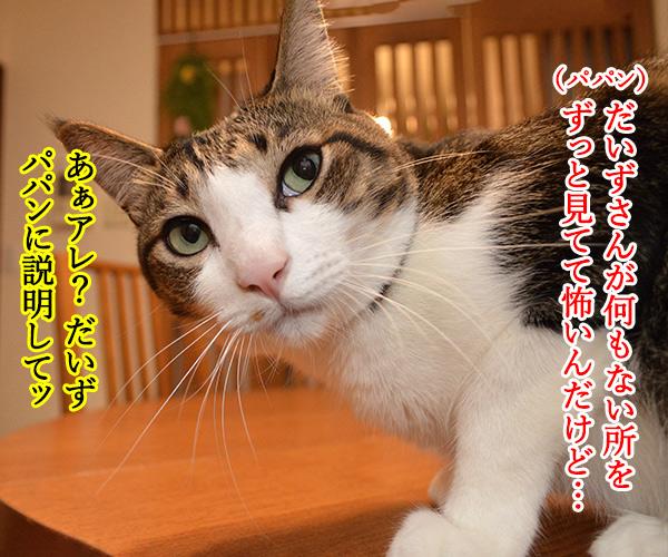 陰陽師(其の一)ねぇ? 何を見てるの? 猫の写真で4コマ漫画 3コマ目ッ