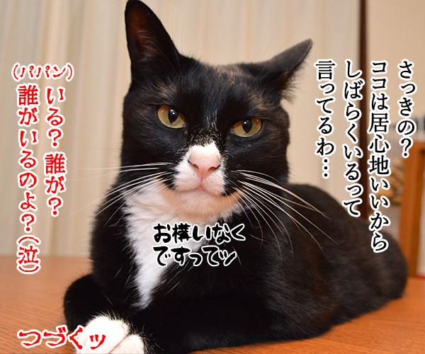 陰陽師(其の一)ねぇ? 何を見てるの? 猫の写真で4コマ漫画 4コマ目ッ