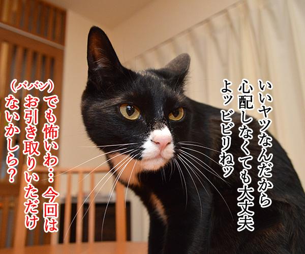 陰陽師(其の二)いいヤツだから心配しなくても大丈夫? 猫の写真で4コマ漫画 1コマ目ッ
